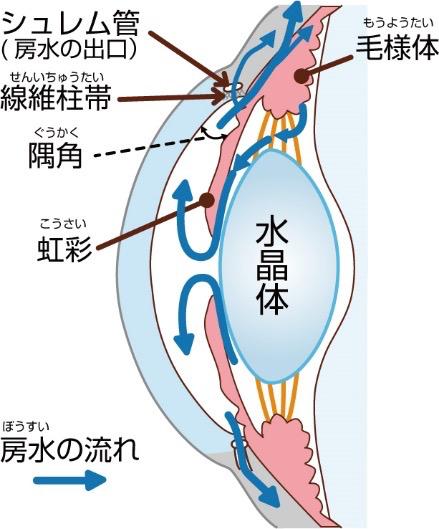 隅角繊維柱帯
