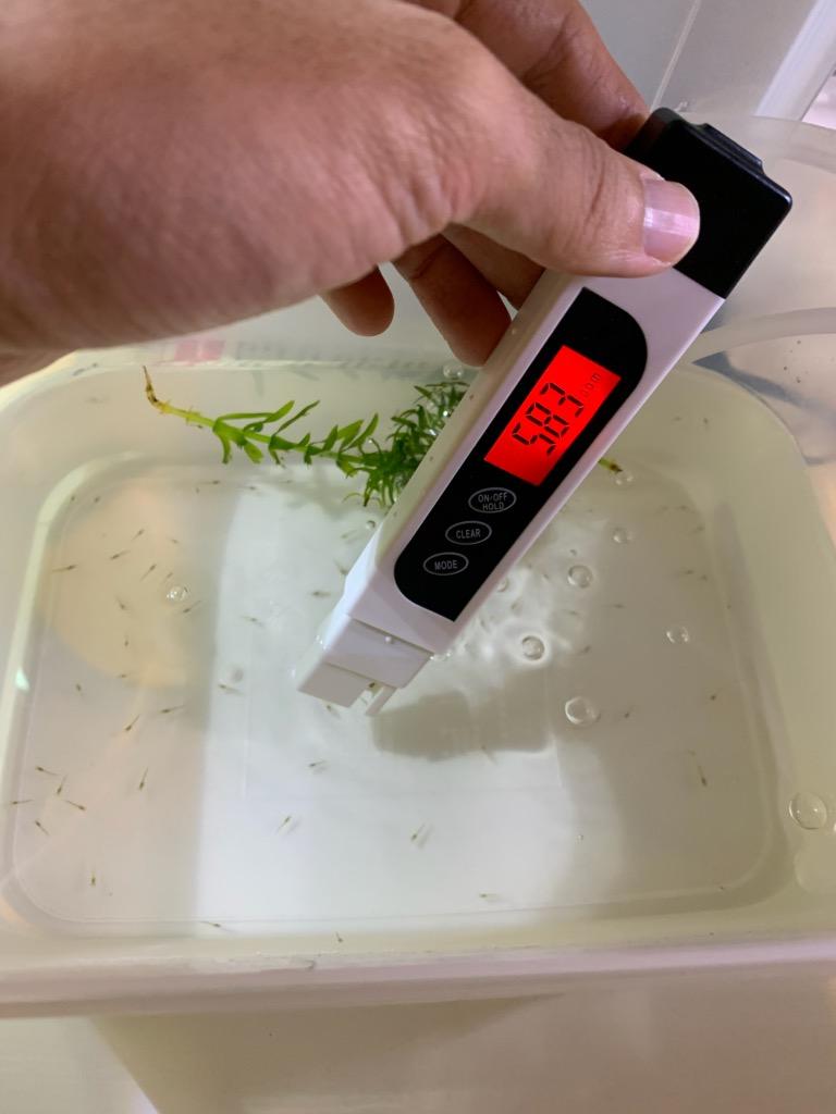 稚エビ飼育ケースのPPM測定