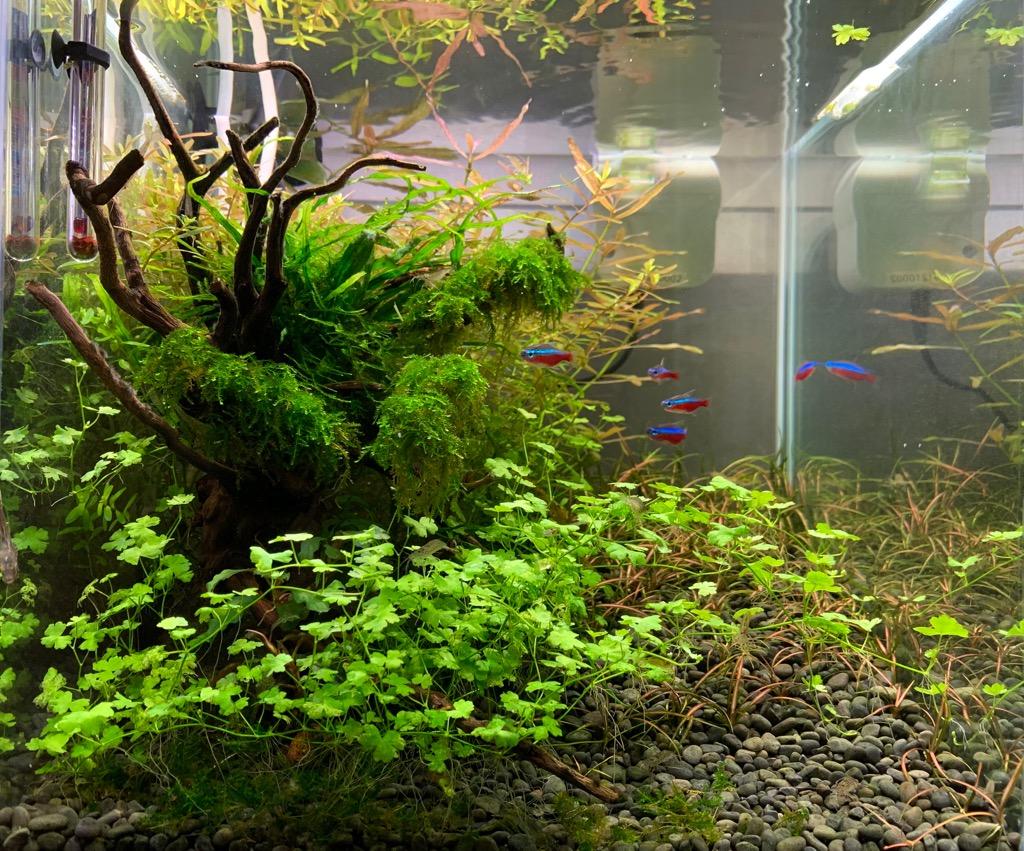 オーストラリアンクローバーの植栽3カ月