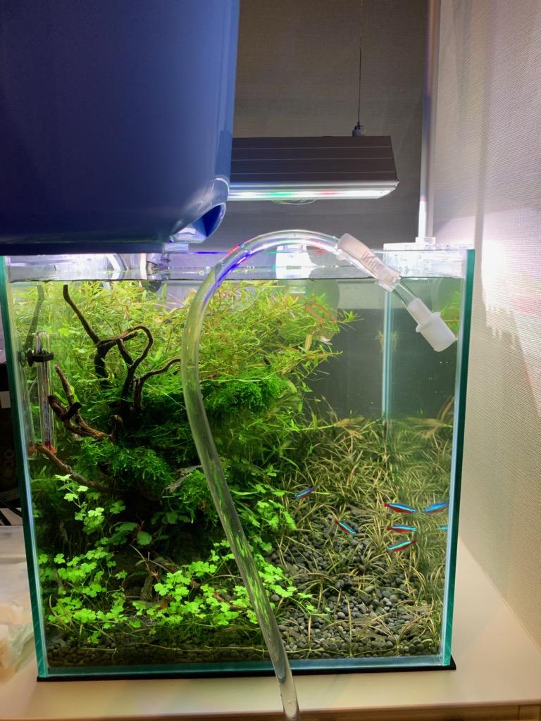 プロホースを使ってゆっくりと換水