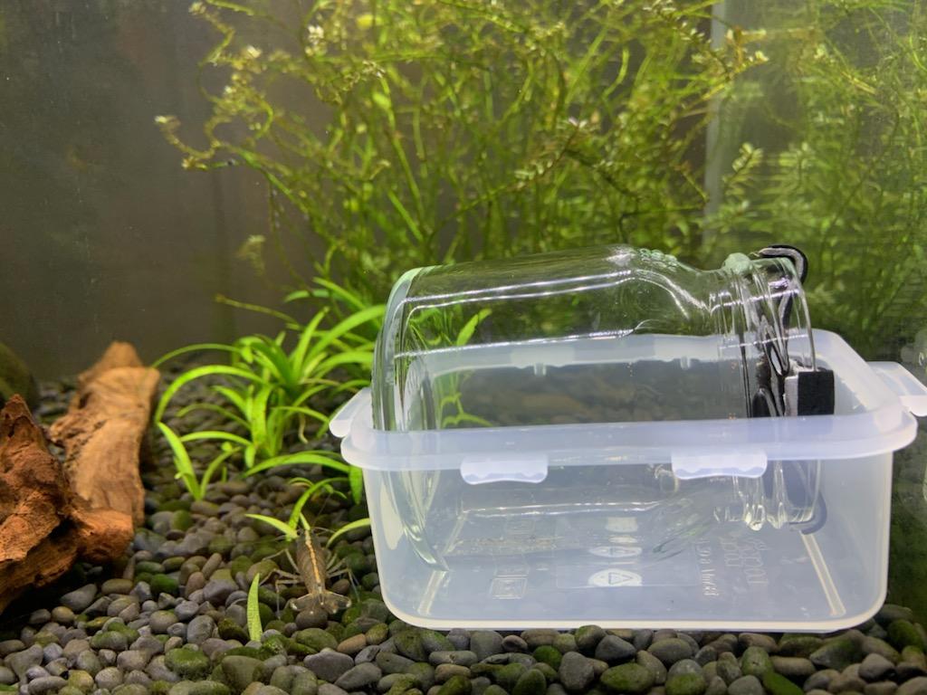 餌付け道具の水槽設置2