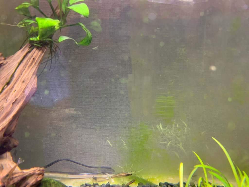 60cm水槽の苔