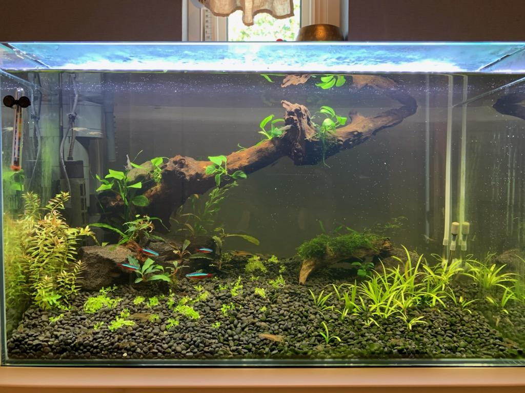 植栽を終えたニューラージパールグラス