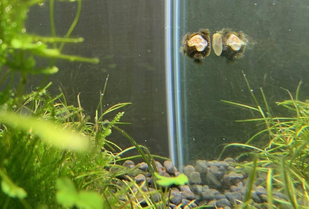 お迎え22ヵ月目の石巻貝