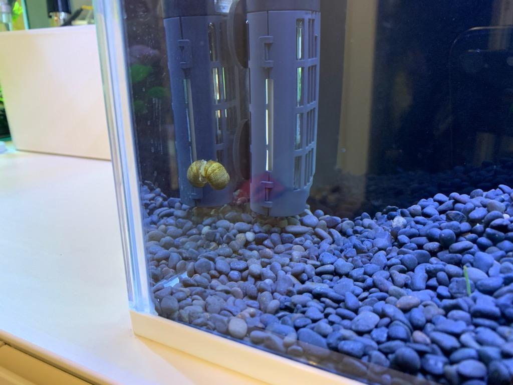 お迎え2ヵ月目の石巻貝