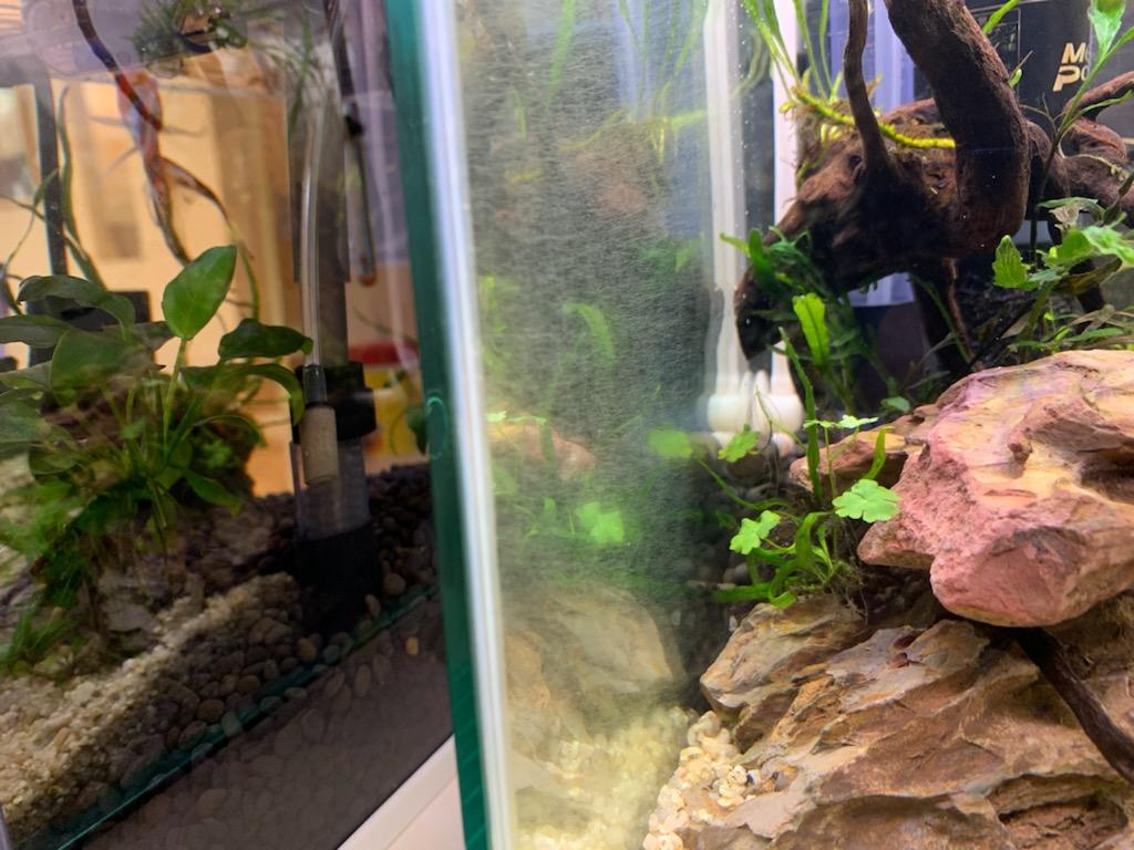 ガラス面を覆う糸状ゴケ