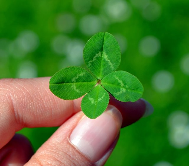 a four‐leaved clover