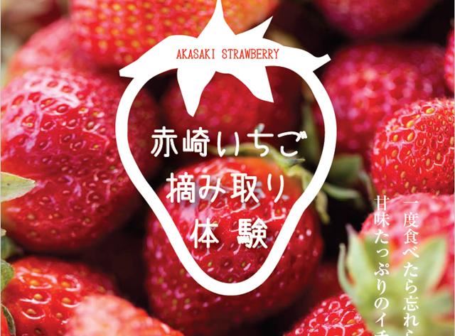 赤崎いちごのポスターの写真