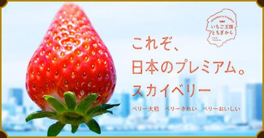f:id:makoto-endo:20160317123931p:plain