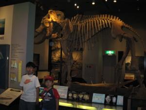 ナウマンゾウの骨格標本複製