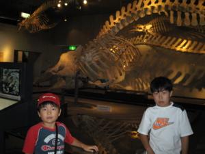 鯨の骨格標本