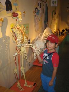 人体骨格模型と握手する次男