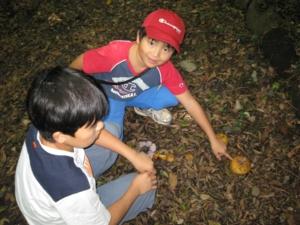 生態園でキノコと遊ぶ
