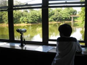 野鳥観察舎から舟田池を望む