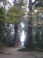境内の杉の大樹