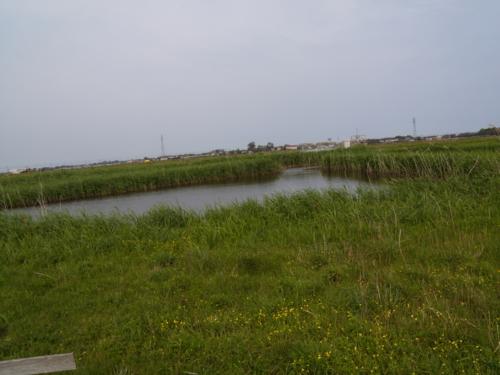 成東・東金食虫植物群落
