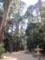 奥参道の樹叢と意味不明な帯状の盛砂