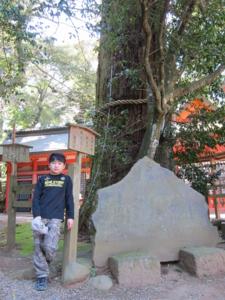 鹿島神宮 芭蕉句碑 と 二郎杉