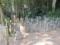 塚原卜伝墓近くの古い墓石