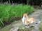 花菖蒲と野良猫