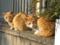 塀の上の猫二匹
