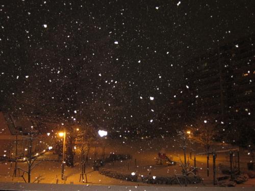 昨夜の雪の様子 2
