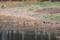 浅瀬で待機中のセイタカシギたち1