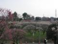 習志野梅林園
