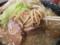 大虎の麺とブタ