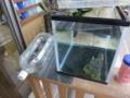 水草の卵を隔離して稚魚を育てる