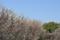 習志野 梅林園