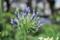 マンションの庭の花1