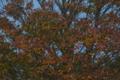 色付き始めた谷津干潟の木々