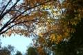 赤坂の街路樹