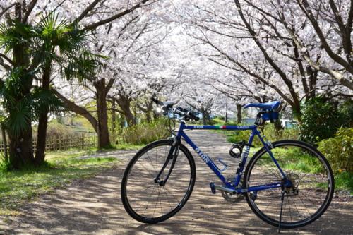 桜とアピ夫2
