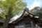 樹齢800年の大銀杏と本殿