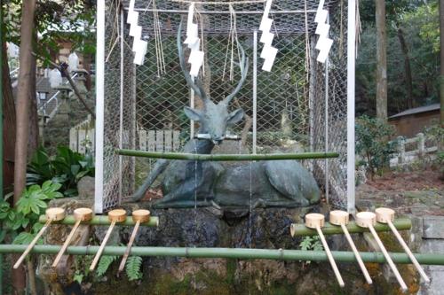 手水所の神鹿