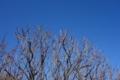 梅林公園の梅の木