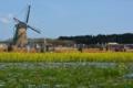 風車とネモフィラとチューリップ