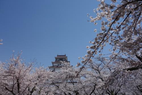 満開の桜の中の鶴ヶ城