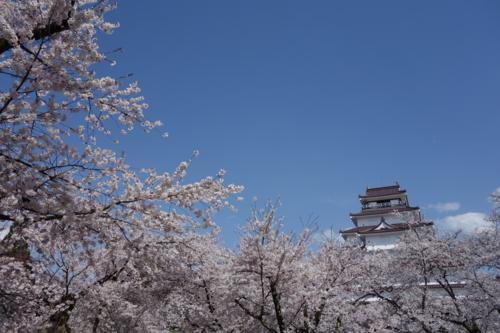 会津の桜と鶴ヶ城