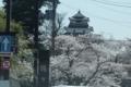 市役所前の通りから鶴ヶ城を望む