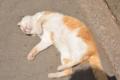 前山寺門前の猫