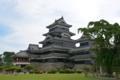 松本城と清正公駒つなぎの桜