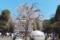 上野公園のしだれ桜