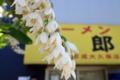 眉二郎と街路樹の花