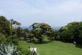 大島公園の海