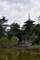 猿沢池から望む五重塔