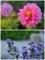三陽メディアフラワーミュージアム内の花