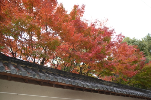 京都の町中の紅葉